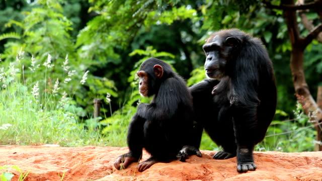 vídeos y material grabado en eventos de stock de joven madre y chimpanzees - chimpancé