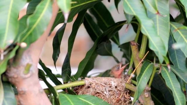 mother の鳥の餌付けお食事に新しいボルン - 雛鳥点の映像素材/bロール