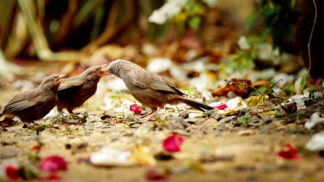 Mother bird is feeding nestlings