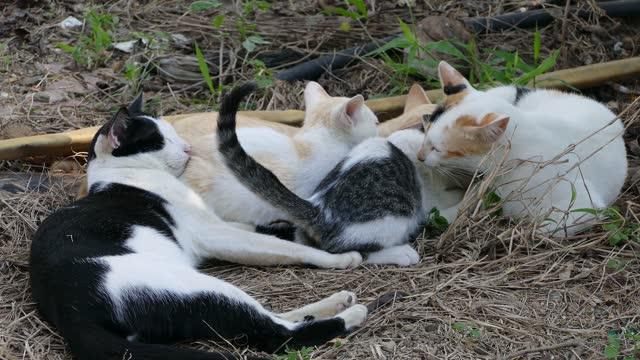 母猫母乳育児 - 迷子の動物点の映像素材/bロール