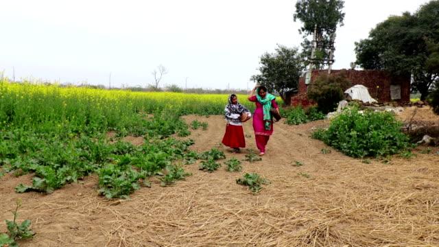 mother & daughter walking near mustard crop field - haryana stock videos & royalty-free footage