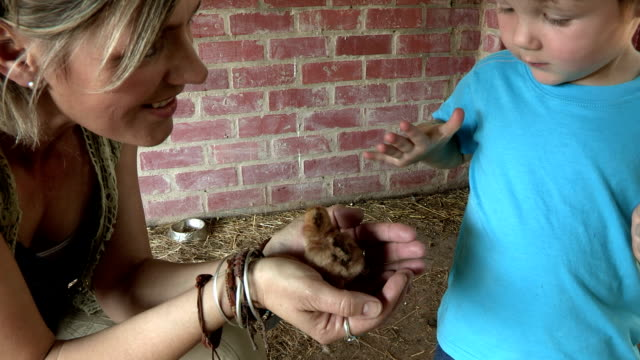 Mother holding baby chicken showing it to pre-school toddler