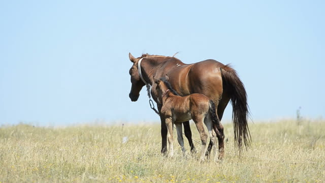 Mutter und ihr Pferd colt