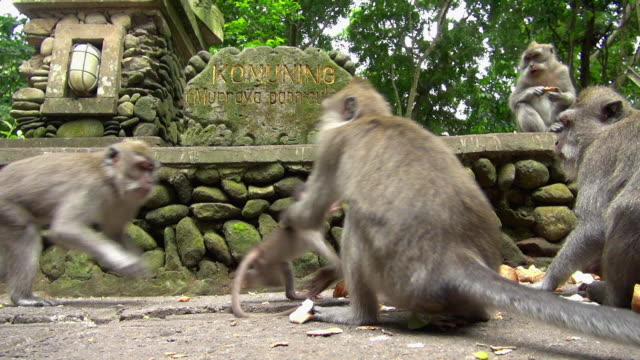 Mother Monkey Protects Child