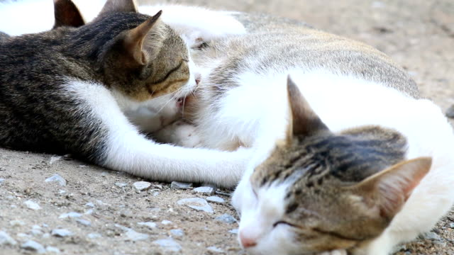 mother of cat nursing her little kittens - woman breastfeeding animals stock videos and b-roll footage