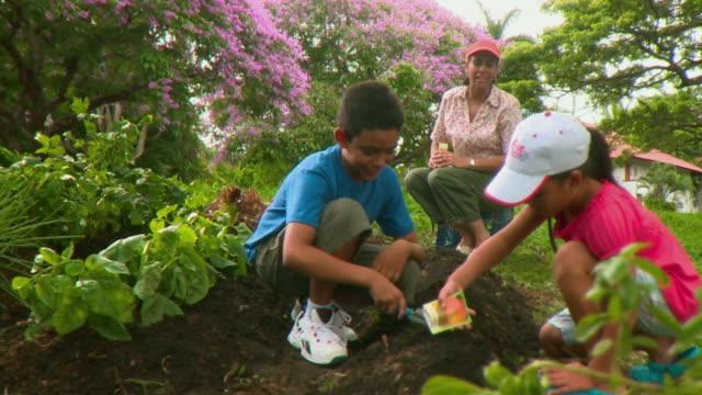 vídeos de stock e filmes b-roll de ms pan mother supervising son(8-9) and daughter (8-9) planting seeds in vegetable garden, panama city, panama  - espalhar