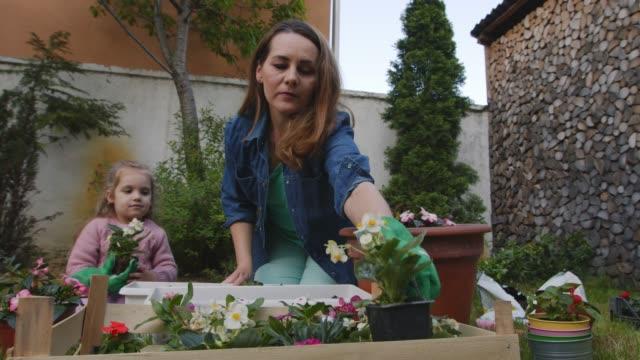 vidéos et rushes de mère enseignant à sa fille en bas âge comment prendre soin des fleurs pendant qu'elles jardinent - gant de jardinage