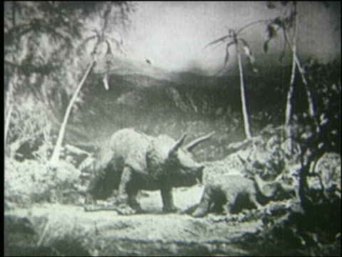 b/w mother triceratops nudges baby to run away then she follows in jungle - triceratops stock videos and b-roll footage