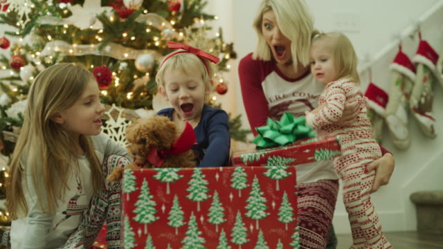 vídeos de stock e filmes b-roll de mother watching daughter open gift box containing puppy on christmas / vineyard, utah, united states - prenda