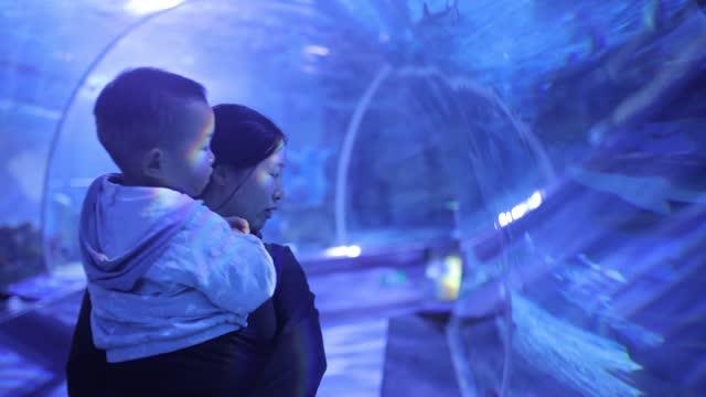 mother with his baby looking fish in aquarium - aquarium stock videos & royalty-free footage