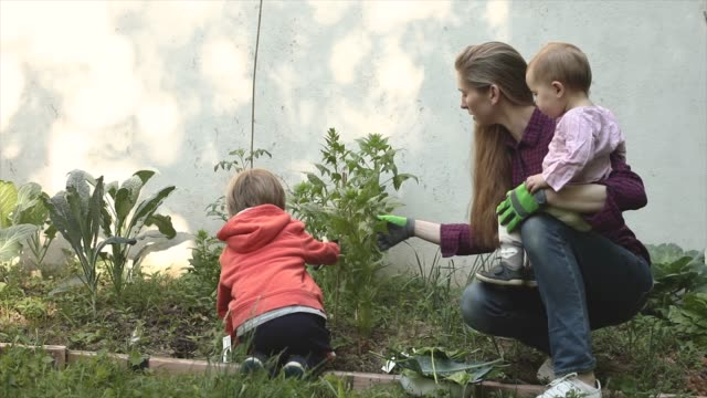 mother with son and baby girl tend to organic homegrown vegetable patch - unabhängigkeit stock-videos und b-roll-filmmaterial