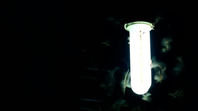 moths flying around a light bulb - energy efficient lightbulb stock videos and b-roll footage