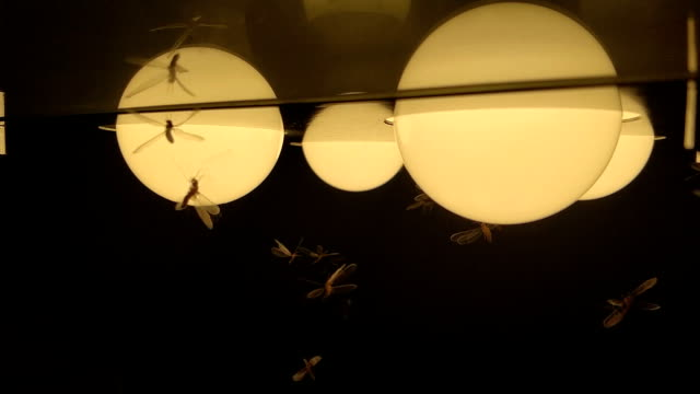 moths termites and insects playing, flying around light at night - moth stock videos and b-roll footage