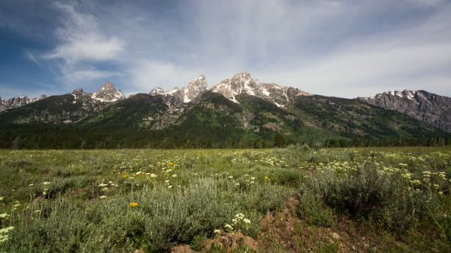 motion control time lapse of grand teton mountains and wild flowers - grand teton stock-videos und b-roll-filmmaterial