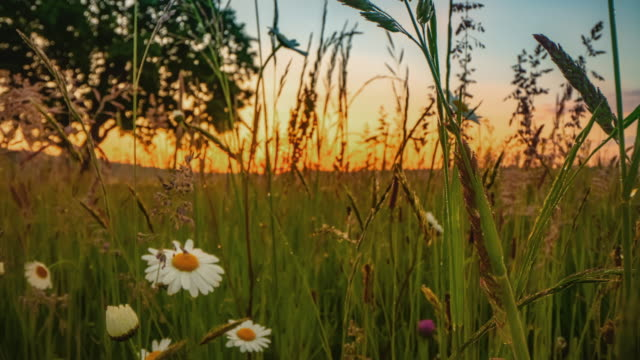 motion control time lapse spring meadow at sunrise - wildflower stock videos & royalty-free footage