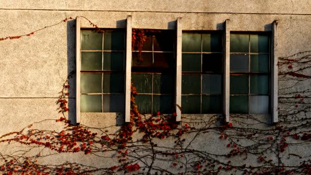 vídeos de stock, filmes e b-roll de movimento da sombra de plantas trepadeira na parede de mármore 4k dci - trepadeira