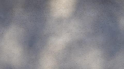 vídeos y material grabado en eventos de stock de movimiento de sombra de hoja en la pared - sombra