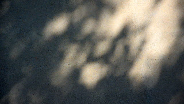 motion of leaf shade on the wall - luminosità video stock e b–roll