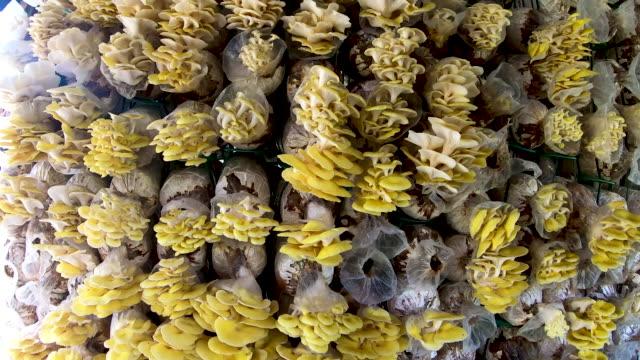 motion of mushroom farm wall background - mercato di prodotti agricoli video stock e b–roll