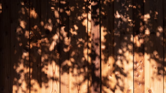 vídeos de stock e filmes b-roll de motion of tree shade on wood wall 4k dci - com sombra
