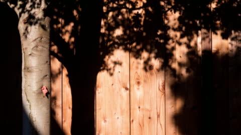 木壁4k dci上の木陰の動き - 影のみ点の映像素材/bロール