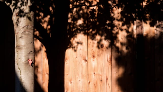 motion of tree shade on wood wall 4k dci - curve stock videos & royalty-free footage