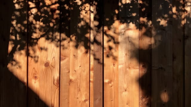 vídeos de stock e filmes b-roll de motion of trees shade on wood wall full hd - com sombra