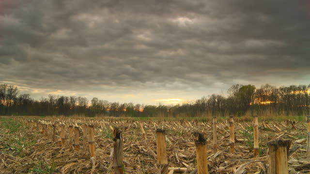 HD Motion Time-Lapse: Cloudscape Over Corn Stubble