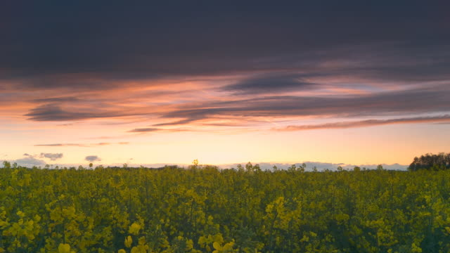 hd motion time-lapse: cloudscape sunset scene over countryside - canola stock videos and b-roll footage