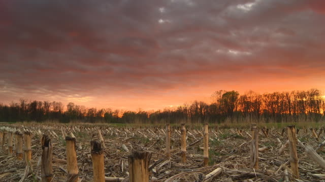 hd motion time-lapse: field of corn stubble at sunset - stubble stock videos and b-roll footage