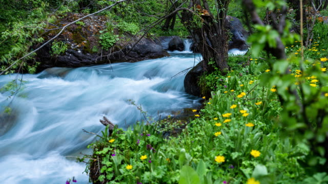 motion timelapse of a glacial river surrounded by green vegetation and flowers - falling water stock videos & royalty-free footage