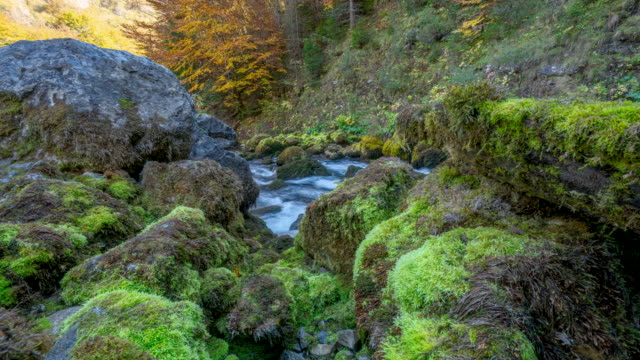 motion timelapse of mossy rocks near a river in durmitor national park - durmitor national park stock videos & royalty-free footage