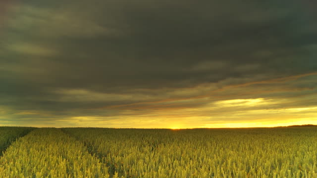 HD Motion Time-Lapse: Storm Over The Wheat Field