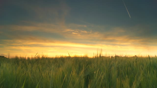 HD Motion Time-Lapse: Sunset Over Field Of Barley