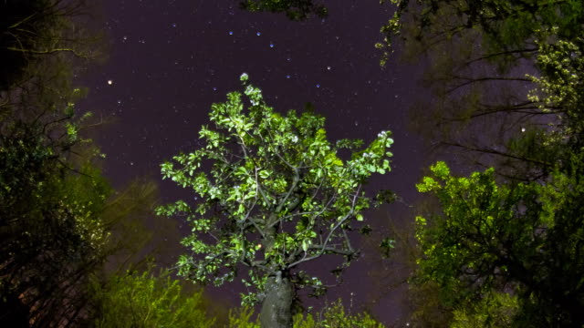 hd motion time-lapse: treetops against night sky - dolly shot stock videos & royalty-free footage