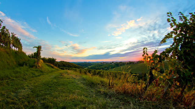 HD Motion Time-Lapse: Vineyard At Sunset