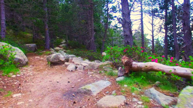 vídeos de stock, filmes e b-roll de motion view over the path in the beautiful pyrenees between woods on summer time with warm temperature. - ponto de vista de caminhada