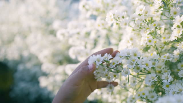 vídeos de stock e filmes b-roll de slow motion.girl hand touching the flowers of white flower. - bouquet