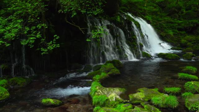vídeos de stock, filmes e b-roll de cachoeira motodaki - plusphoto