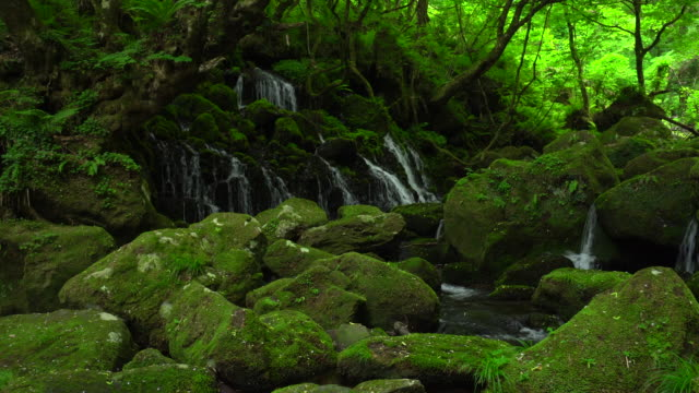 motodaki falls - moss stock videos & royalty-free footage