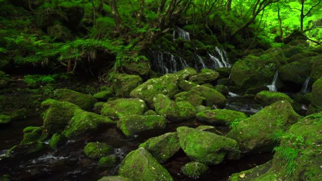 vídeos de stock, filmes e b-roll de cachoeira motodaki - musgo