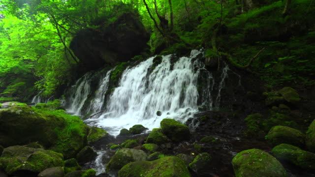 motodaki の滝 - 元滝点の映像素材/bロール