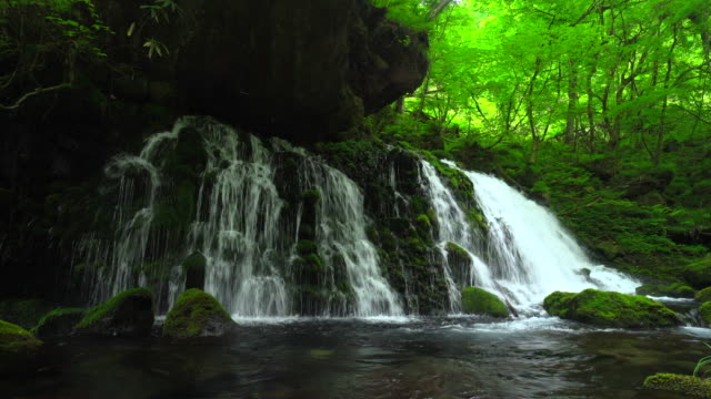 motodaki falls - lush video stock e b–roll