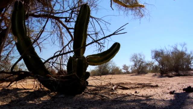 motorbike ride past cactus dolly - baja california peninsula stock videos and b-roll footage