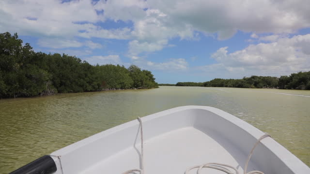 Motorboat driving on the river in Ria Lagartos Biosphere Reserve , Yucatan Peninsula Mexico