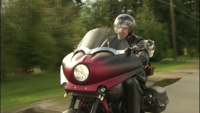 a motorcyclist rides with his american eskimo dog on the back the bike. - american eskimo dog stock videos & royalty-free footage