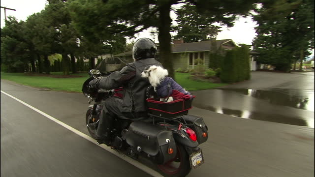 a motorcyclist rides with his american eskimo dog. - american eskimo dog stock videos & royalty-free footage