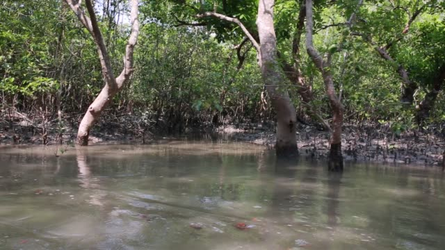moualis are going to search and collect honey from sundarban at satkhira , bangladesh on april 10, 2018. the honey-hunters of sundarban are called... - mangrove forest stock videos & royalty-free footage