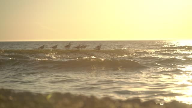 mouettes au coucher du soleil - lumière stock videos & royalty-free footage