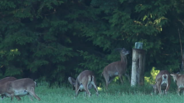 mouflon - 六月点の映像素材/bロール